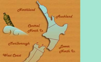 Web Design Auckland